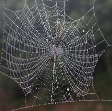 Le ragnatele un tempo erano usate nella medicina empirica della Valle Vigezzo